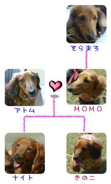 家計図.JPG
